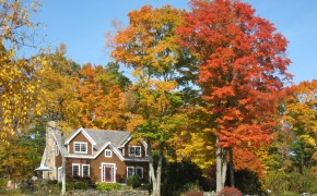 "Fall Foliage ""Leaf-Peeping"" Season!"