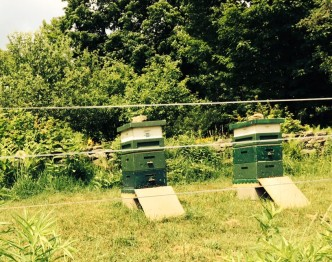 Beekeeping at Frog Meadow New England's Best All Male Gay Resort in Southern Vermont