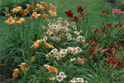 Amazing Daylily Gardens Discover Gay Brattleboro Vermont Gay Retreats Attractions and Men's Workshops Frog Meadow New England's Best All Male Gay Resort in Southern Vermont